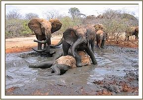 The orphans splash about in the mud bath
