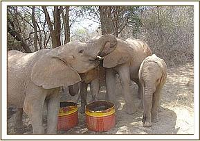 Orphans taking a drink