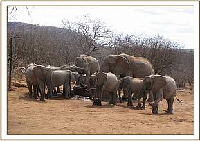 Yattas group with two wild elephants