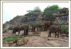The orphans on Ithumba hill