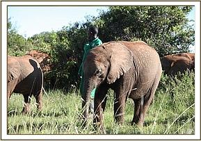 Narok in the field with the others