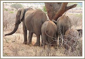 Wild group of eles on the eastern side of Mzinga