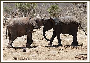 Lemoyian plays with Boromoko