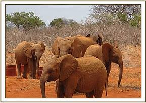 Orphans arrive at the waterhole
