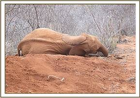 Kenia lying down on damp soil