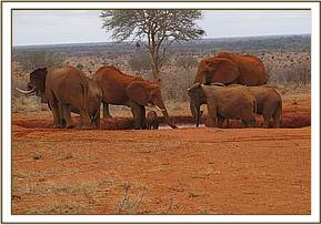 Wild group at the waterhole