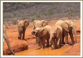 Orphans at the waterhole