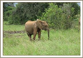 Kenze browsing on his own