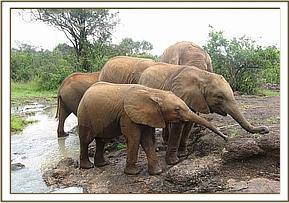 Makena with Chyulu in the foreground