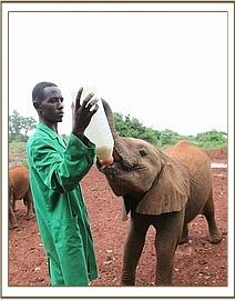Kainuk having milk