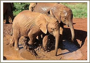 Kihari and Turkwel spalshing in the mudbath