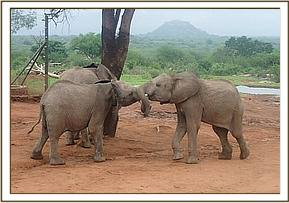 Lemoyian playing with Kithaka