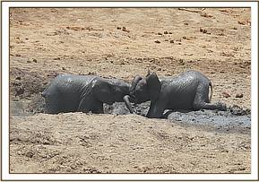 Kilaguni and Ololoo playing in the mudbath
