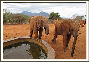 Kenia and Lesanju at the water trough