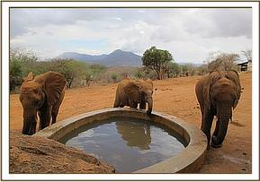 Mbirikani, Mudanda & Panda by the waterhole
