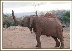 Lempute shows off her trunk