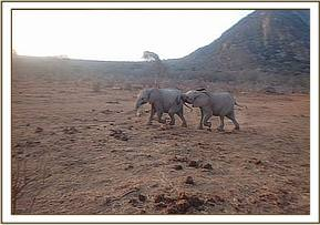Lemoyian pushing Boromoko