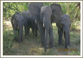 Murera leads babies into the shade