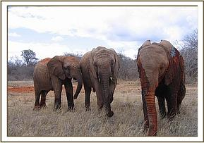 Taita, Napasha & Sunyei muddy from mudbath