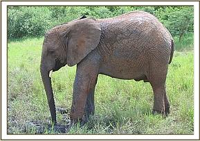 Taita relaxing