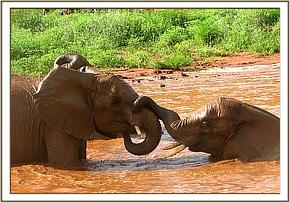 Mpala playing with Salama