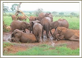 Orphans having fun in a waterhole