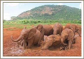 Orphans enjoying a wallow