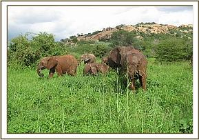Orphans enjoying green pastures