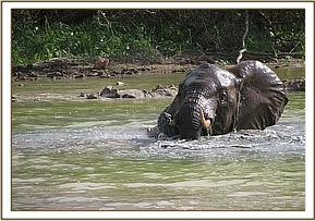 Mgeni playing in the water