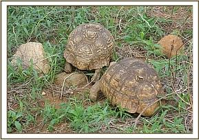 The Tortoises that scared the orphans