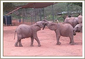 Kasigau and Ololoo playing