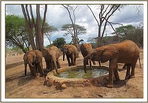 Orphans having a drink of water