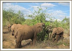 Orphans enjoying soft vegetation