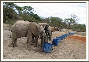 the orphans taking water
