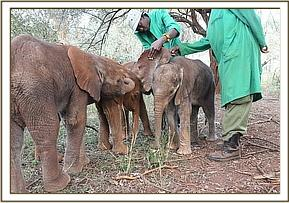 Mshindi is comforted after the drip is removed