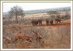 Wild group at the orphans waterhole