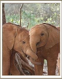 Lemoyian and Barsilinga - buddies