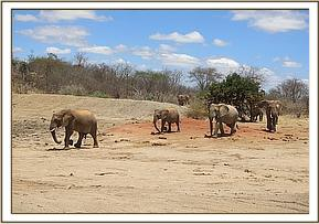 Wild eles and ex orphans coming for the mudbath