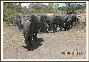 Quanza leading orphans from the water hole