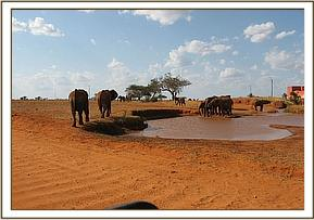 Emily's group at the waterhole