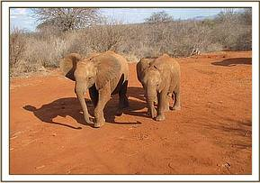 Taveta and Siria walking alongside each other