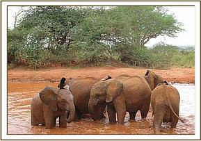 The orphans enjoy mudbathing in a huge waterhole
