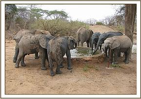 Orphans drinking water at mud bath