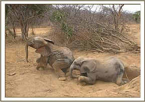 Kilanguni & Sabachi playing
