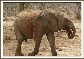Sabachi holding his trunk