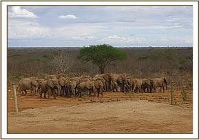 Wild elephants and ex orphans at the stockade
