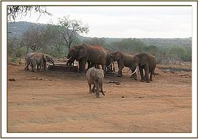 Orphans drinking water with wild eles