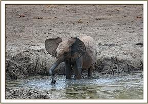 Lemoyian in the mud bath