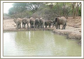 Orphans drinking rain water