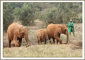Murera with Lemoyian and Orwa in the bush